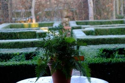 December fern