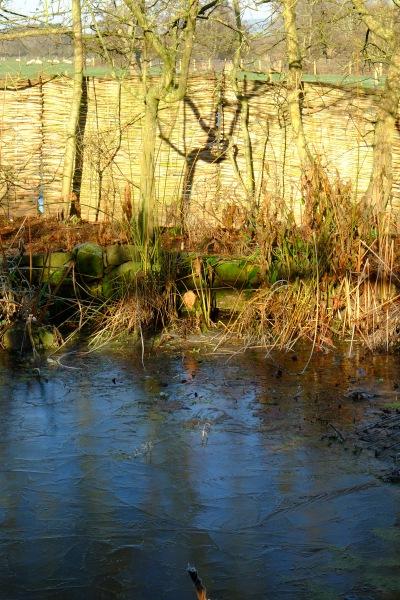December icy pond