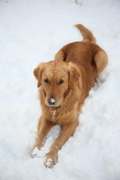 December Nigel in snow