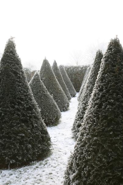 December snowy cones bw