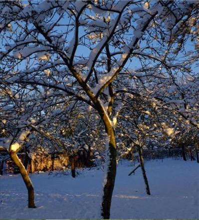 January orchard
